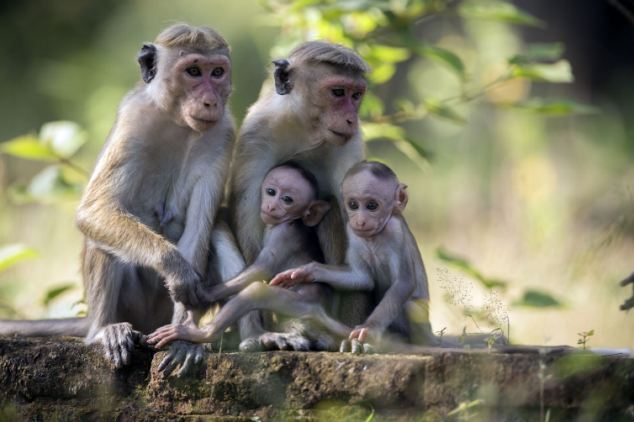 5 Reasons Why Primates Should Never Be Kept As Pets