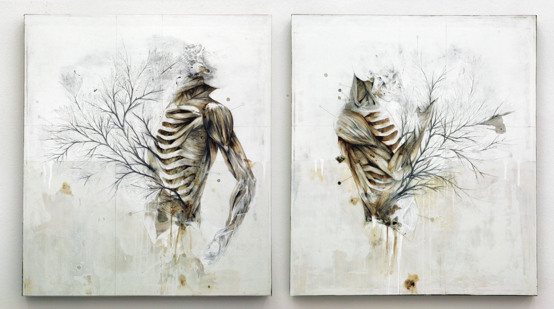 Plants, Animals and People Share Common Anatomy in This Incredible Artist's Work.