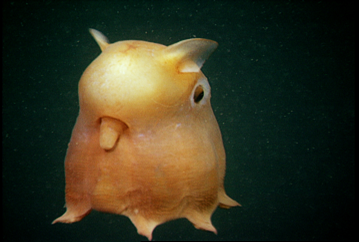 Weird Marine Species