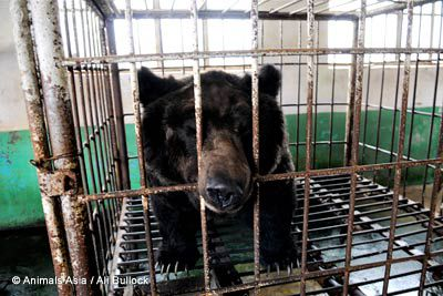 5 Insane Practices That Are STILL Happening That Harm Animals