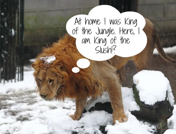 Zoo animals not pleased