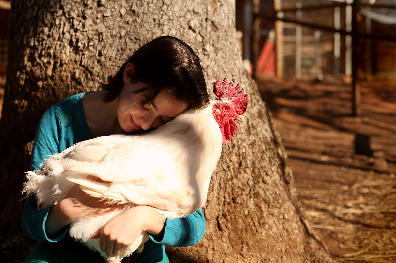 7 Surprising Reasons Chickens Make Awesome Friends