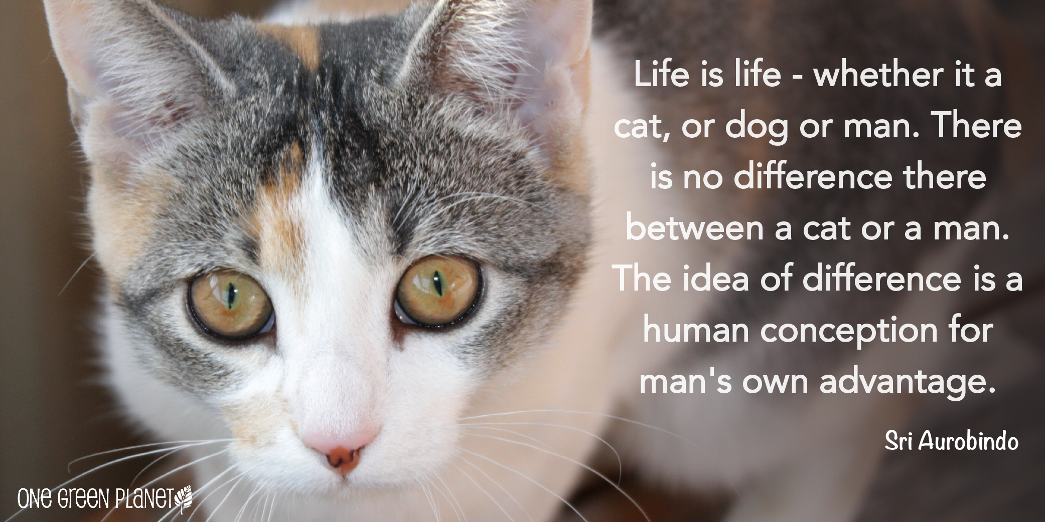 10 Quotes That Will Inspire You to Fight For Animals - One ...