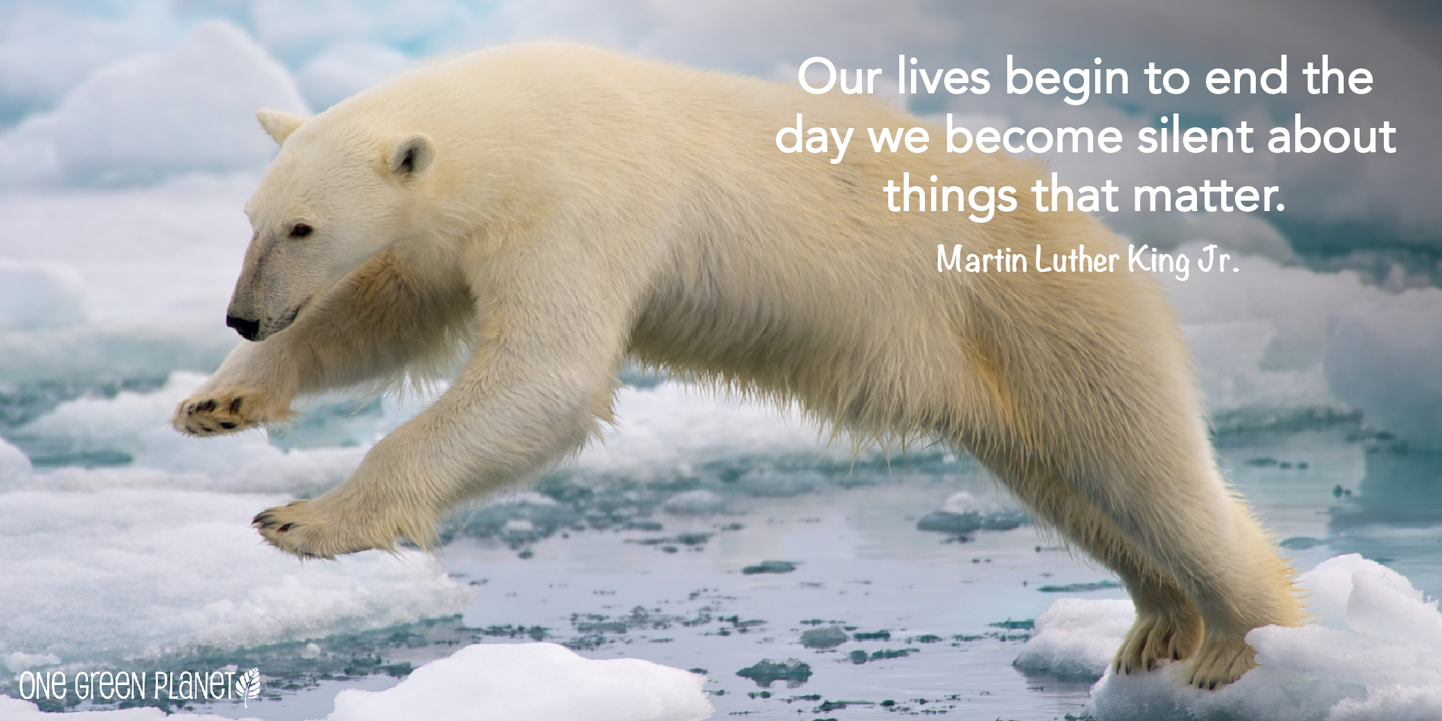 10 Quotes That Will Inspire You To Fight For Animals One Green Planet
