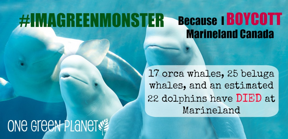 EXPOSED! Marineland Canada, a Living Nightmare for Whales and Dolphins