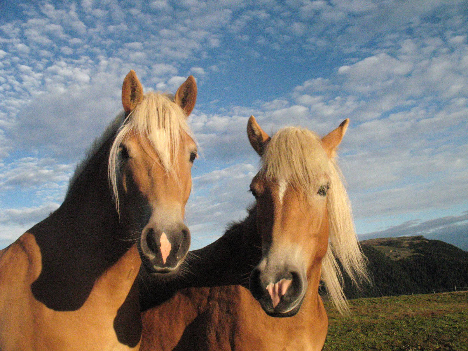How Wild Horses Could Save the American West