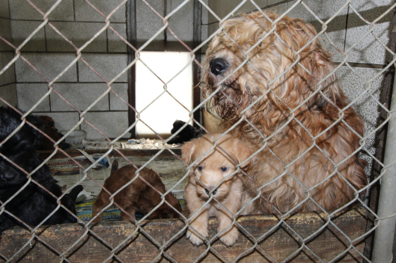 X Photos From Puppy Mills That Prove Without Doubt You Should Always Adopt
