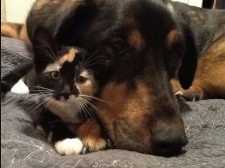 Kitten Lost Her Best Friend. What Her Human Did to Make Her Feel Better Will Warm Your Heart