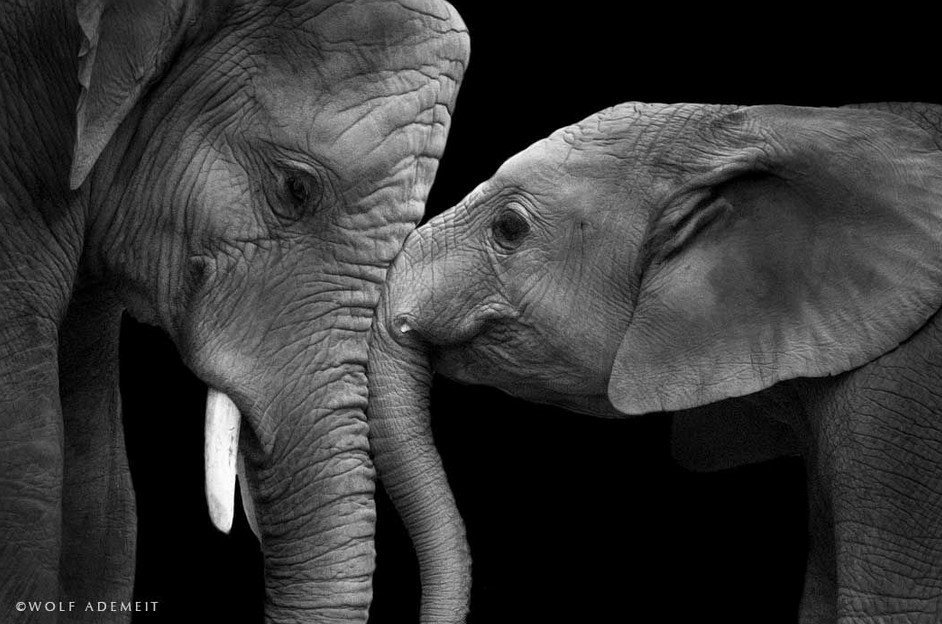 Artists Against Ivory