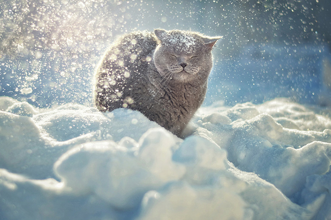 Photos of 12 Animals That Love The Snow