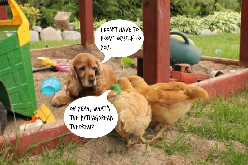 10 Reasons Why We Give a Cluck About Chickens