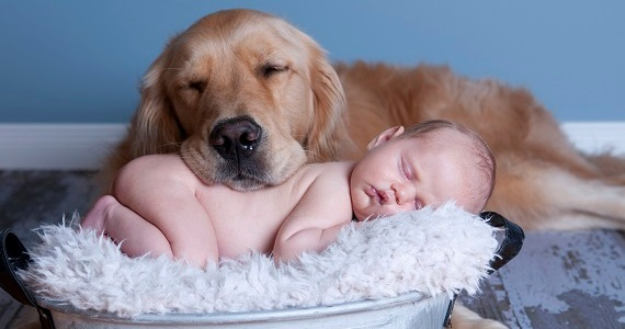 Dogs Who Love Their Human Babies Like Their Own
