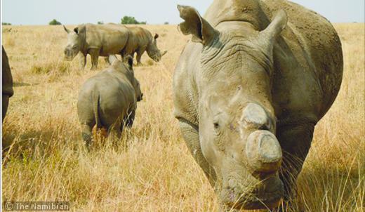 Legalizing Rhino horns