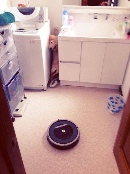 Is Your Pet Threatened By Your Roomba? Tell it Off!