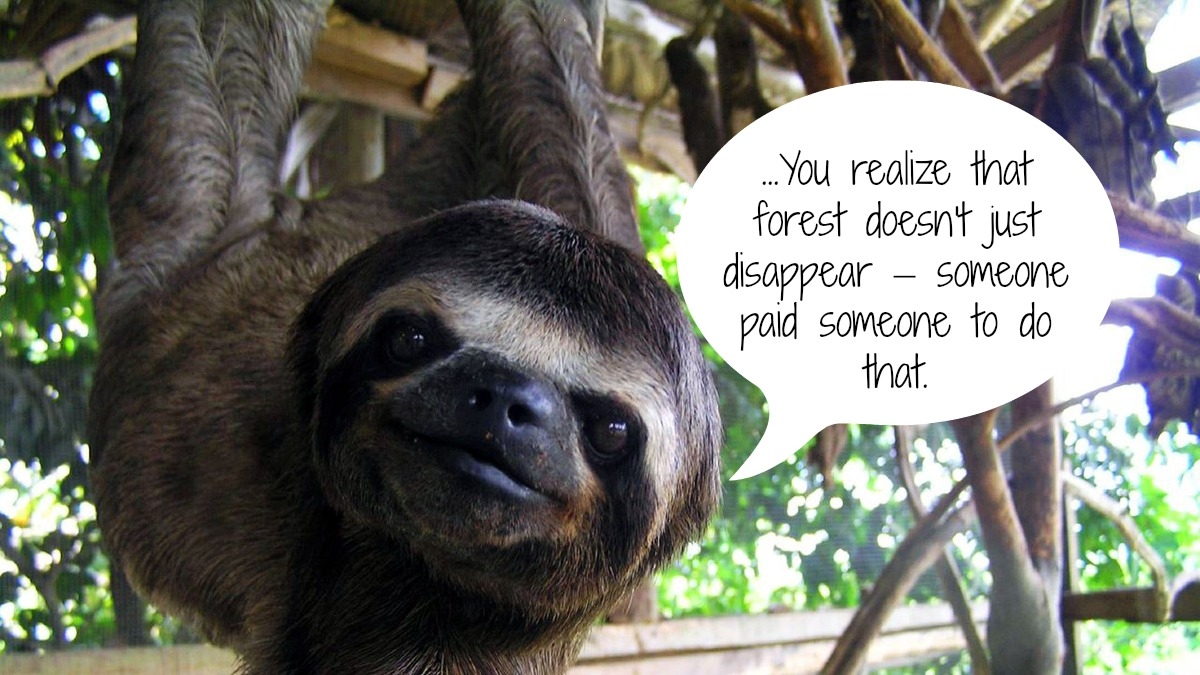 The Sloth's Have Spoken! Here's What They Have to Say About Habitat Destruction