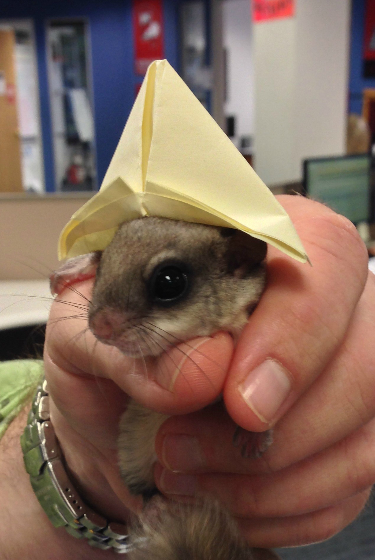 He Found a southern flying squirrel Lying Half Dead and Did the Most amazing thing