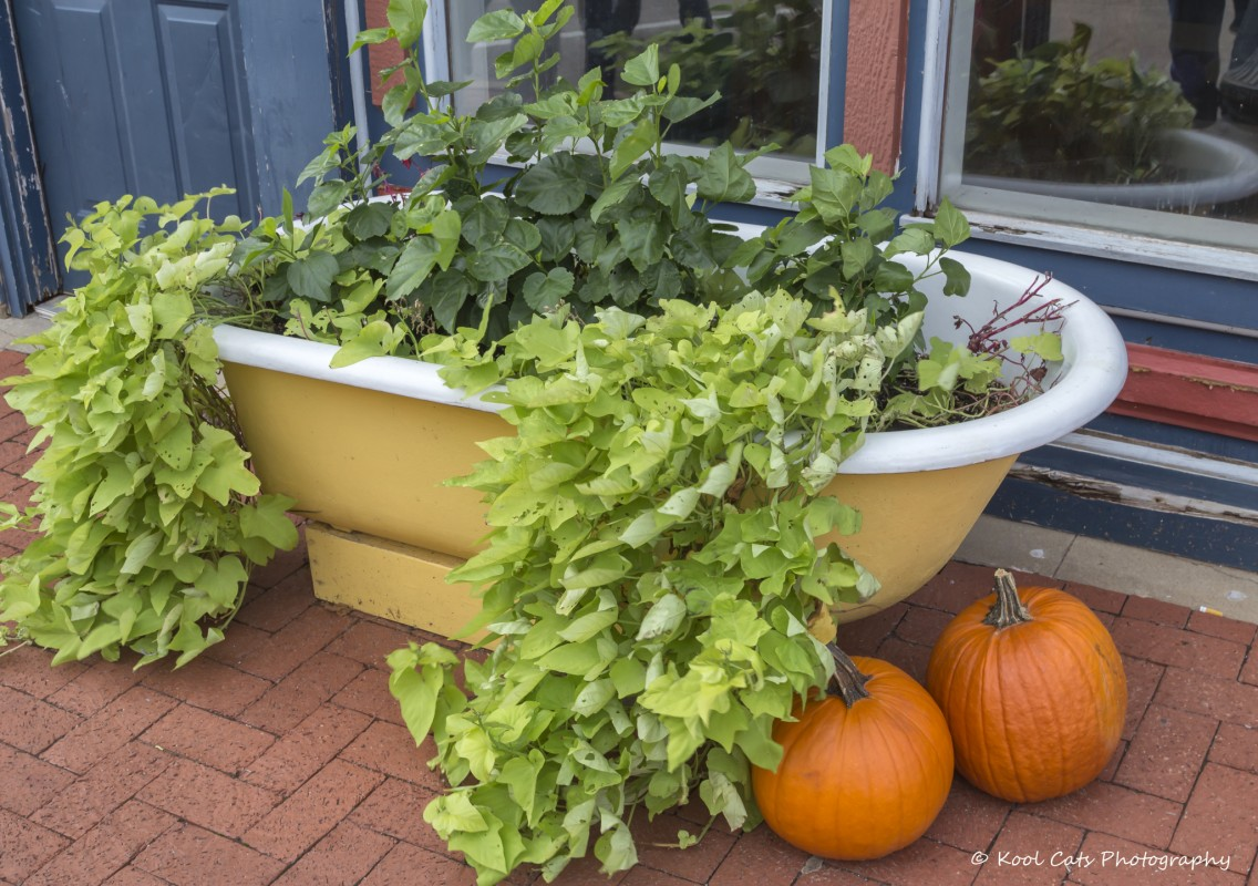 Cool Planters from Recycled Materials