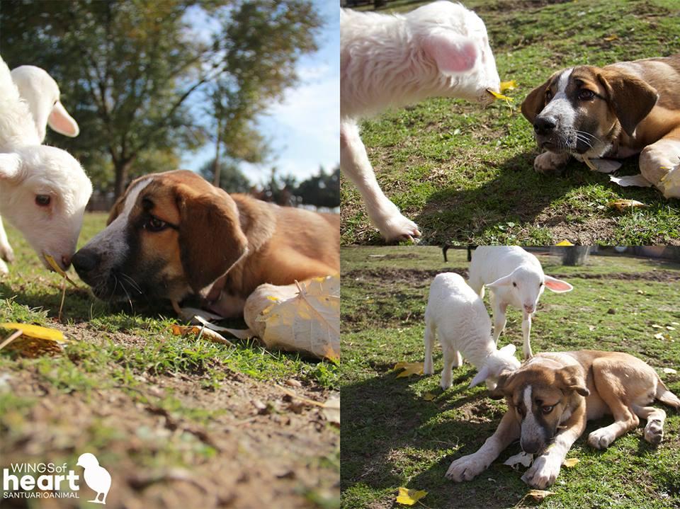 8 Unexpected Farm Animal Best Friends