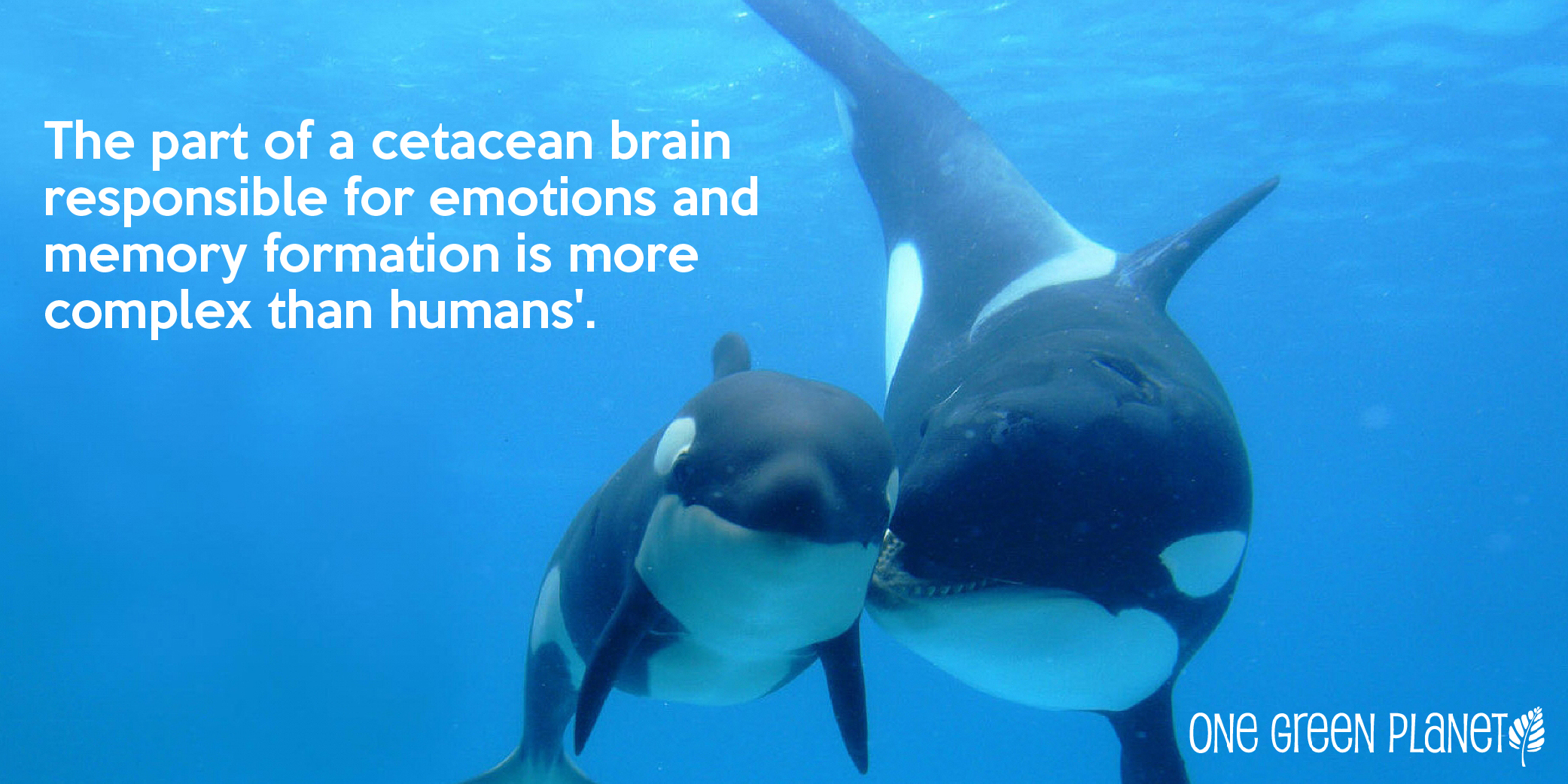 Still Think Humans are the Most Intelligent Animals? Here's Why Whales and Dolphins Have us Beat
