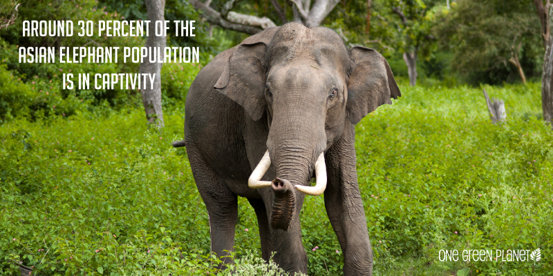 10 Shocking Facts About How the Illegal Wildlife Trade Drives Species Extinction