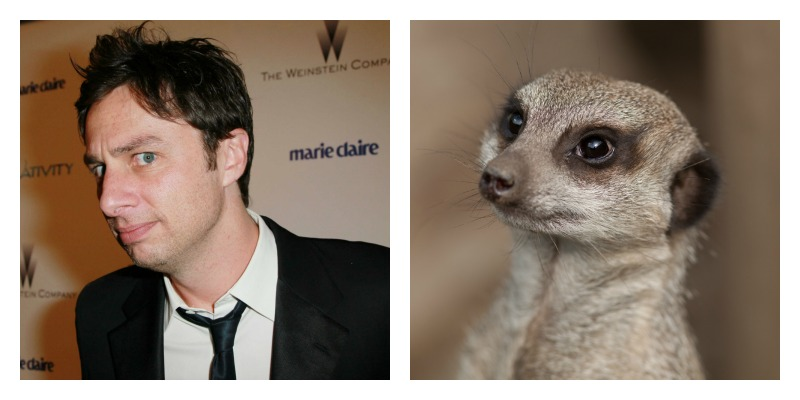 Celebrities and Their Animal Doppelgängers