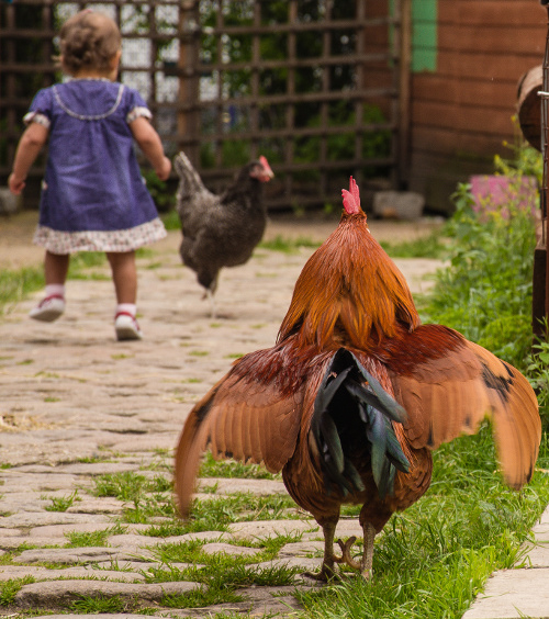 Why We Should Encourage Children To Volunteer With Farm Animals