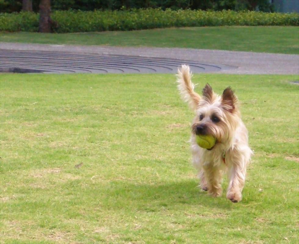 dogplayingball