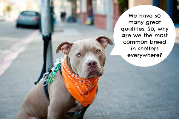 What Pit Bulls Would Say if They Could Speak for Themselves
