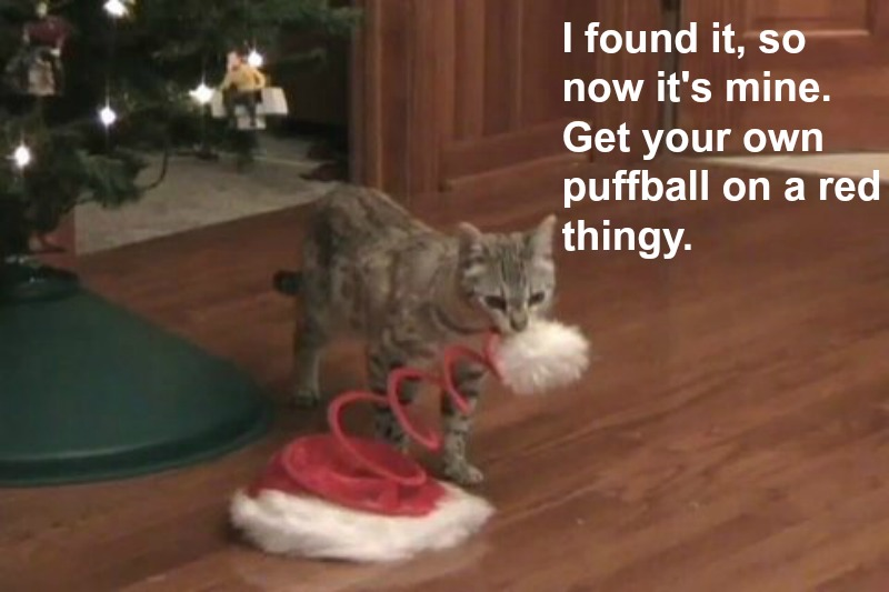 What Are You're Pets Really Thinking This Holiday Season?
