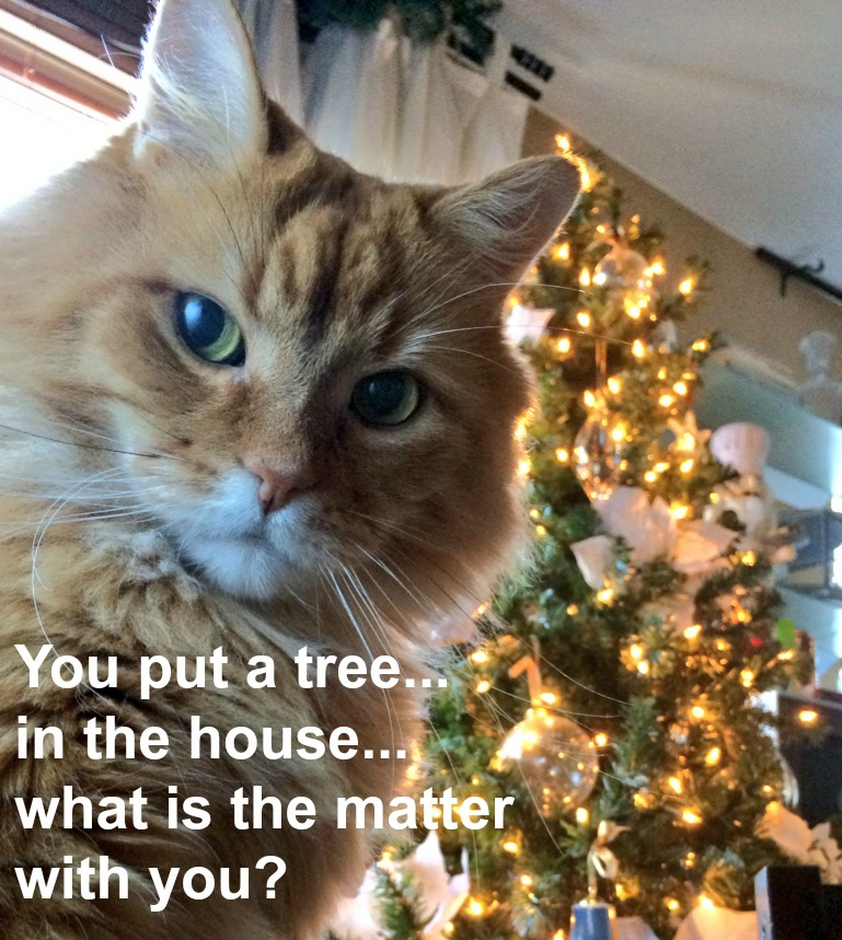 What Are Your Pets Really Thinking This Holiday Season?