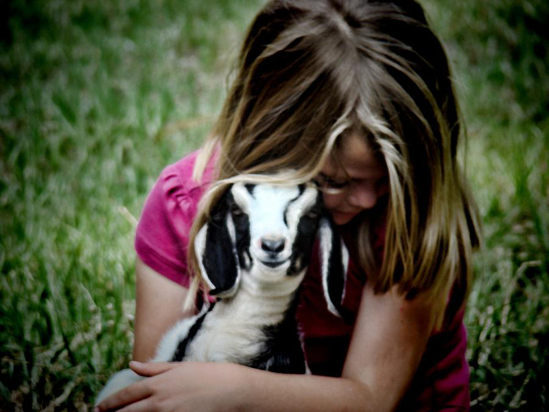 Why We Should Encourage Children To Volunteer With Animals
