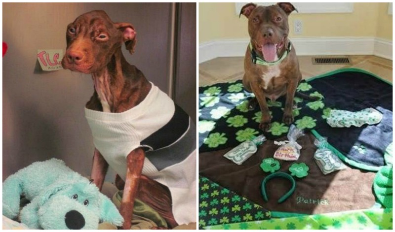 X Times People Did Amazing Things for Animals in 2014