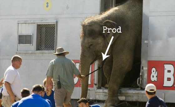 Cruel Methods Used to Train Animals That Will Make You Skip That Show in No Time