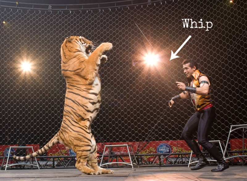 5 Cruel Methods Used to Train Animals That Will Make You Skip the Circus in No Time