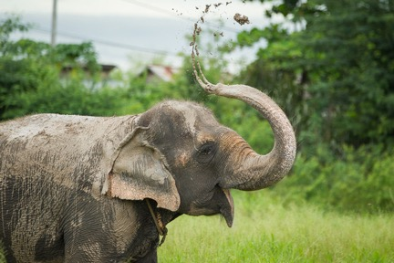 From Tourist Prop to Freedom: Sombo the Elephant Finally Reaches Retirement!
