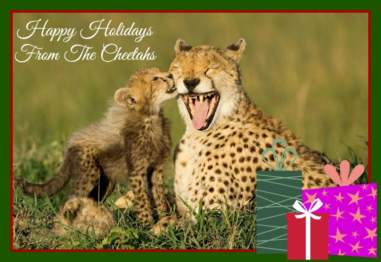 Happy Holidays From These Animal Families!