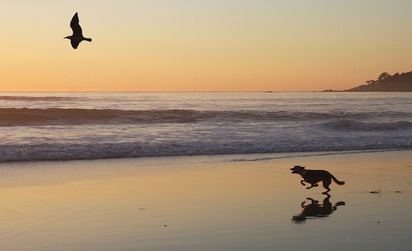 10 Awesome Dog-Friendly U.S. Cities to Visit in 2015