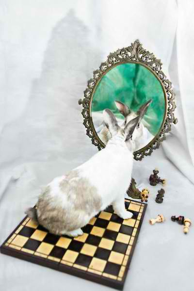 Stunning Alice-in-Wonderland Themed Photos of Former Lab Animals