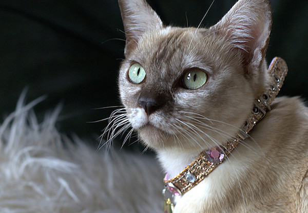 6 Ways Cats are Regaining Their Former Sacred Status