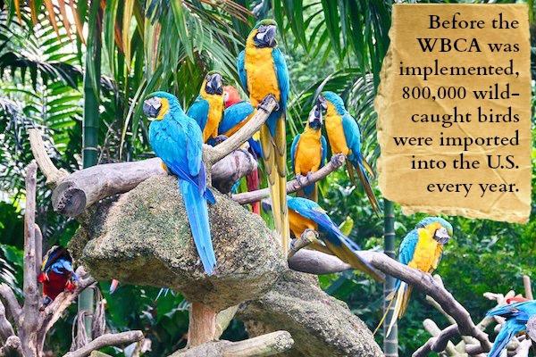 The Terror of the Exotic Bird Trade