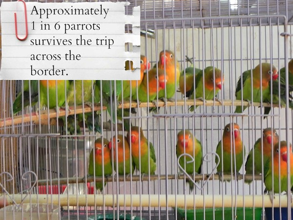 The Truth About the Exotic Bird Trade Will Make You Rethink Buying a Parrot in the Pet Shop