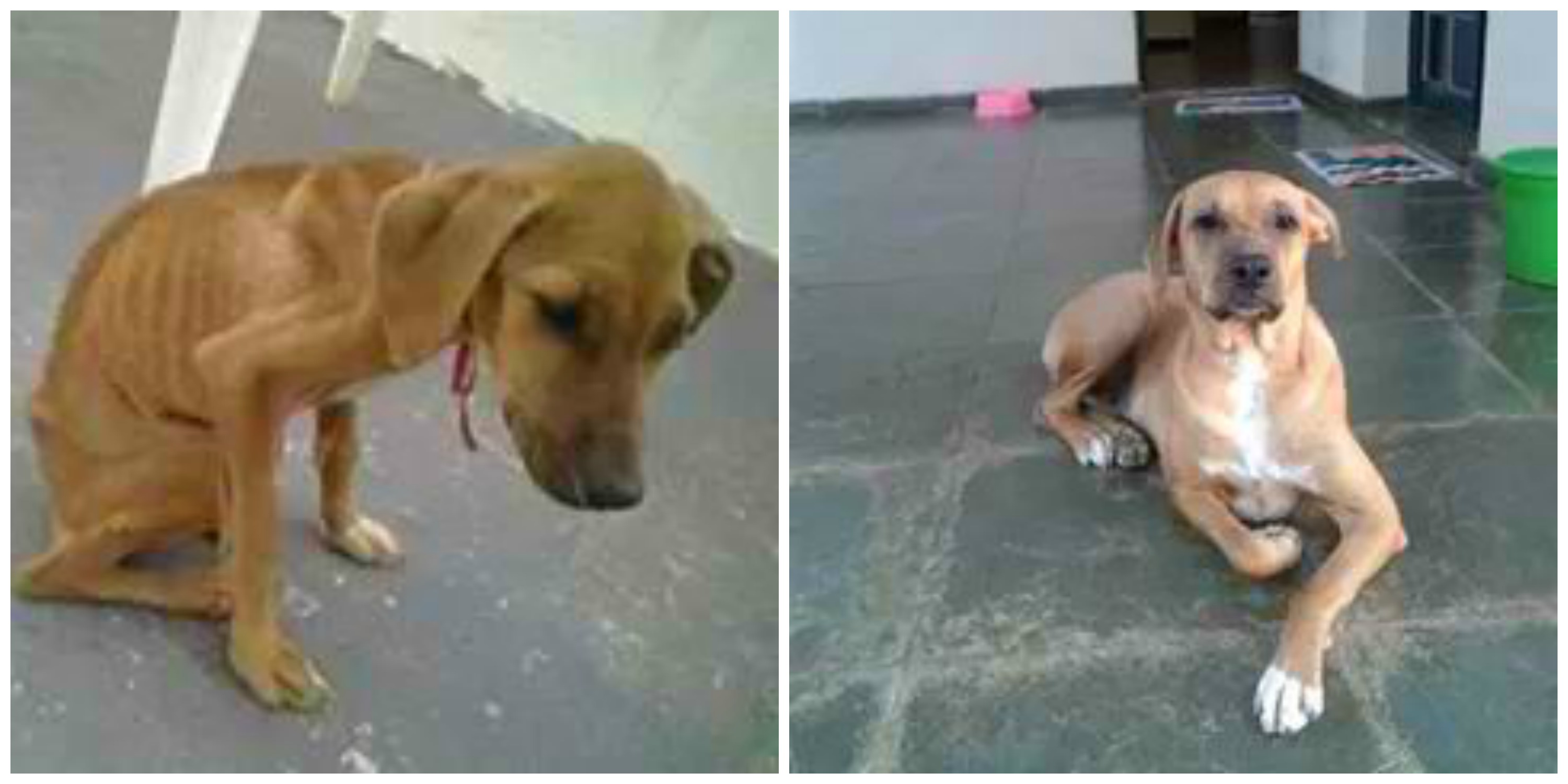 These Heartwarming Before and After Pictures of Adopted Rescue Animals Will Make Your Day