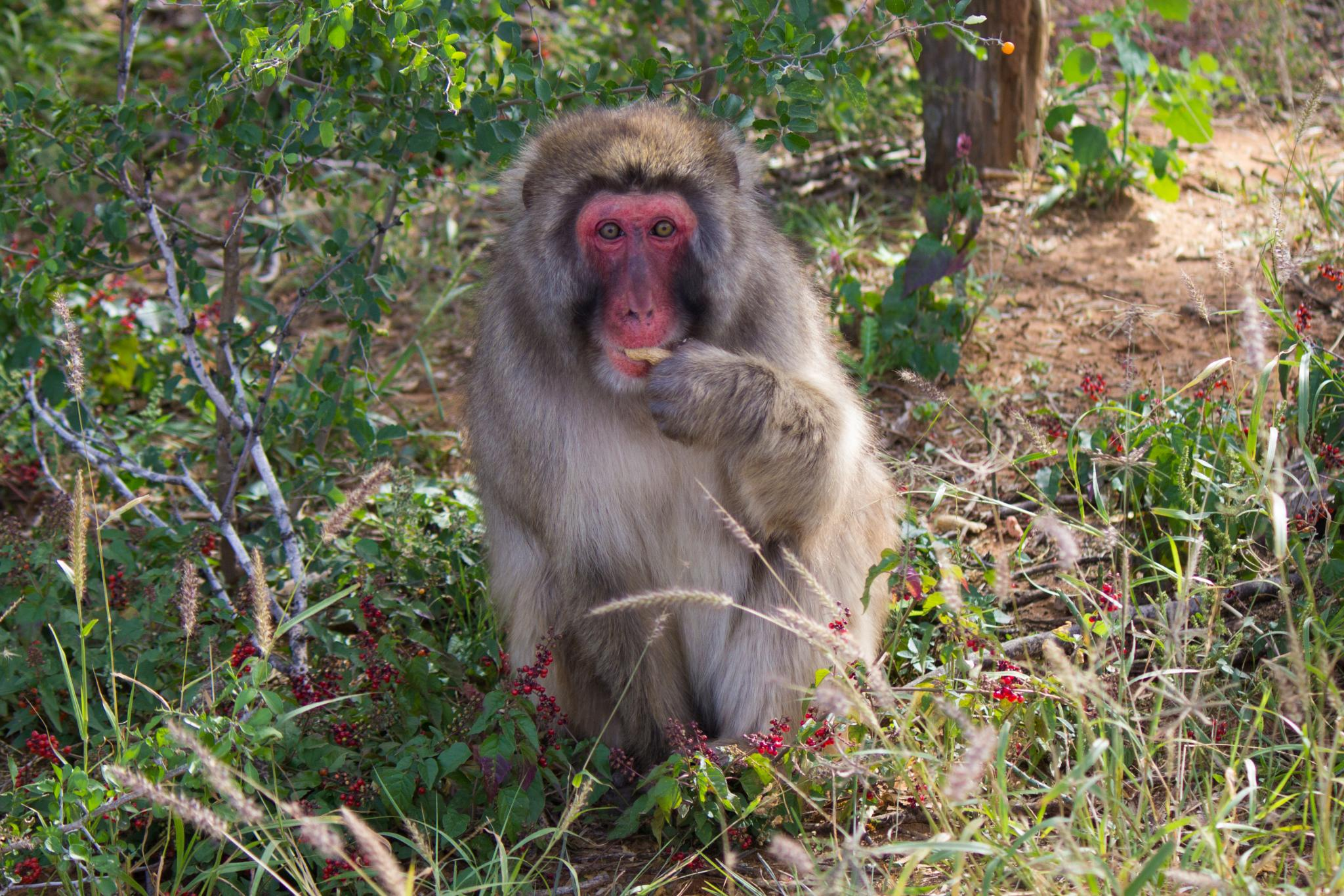 Resident of Born Free USA Primate Sanctuary in Dilley Texas