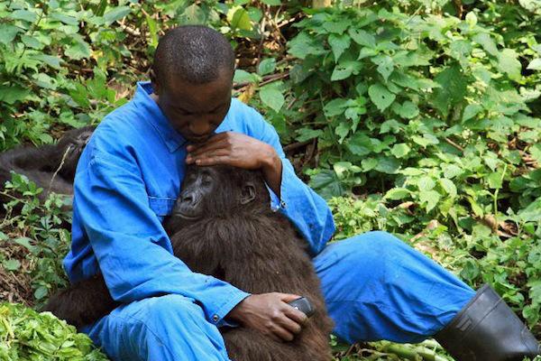 Oil Explorers: Keep your Hands off Virunga, Africa's Oldest National Park