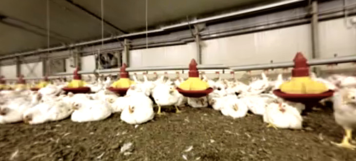 These 360 Degree Cameras Show You What Life is Like for Animals in Factory Farms