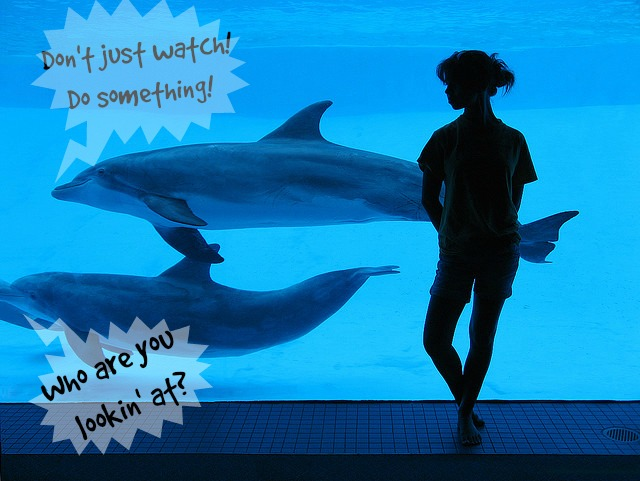 How YOU Can Help Dolphins in Captivity