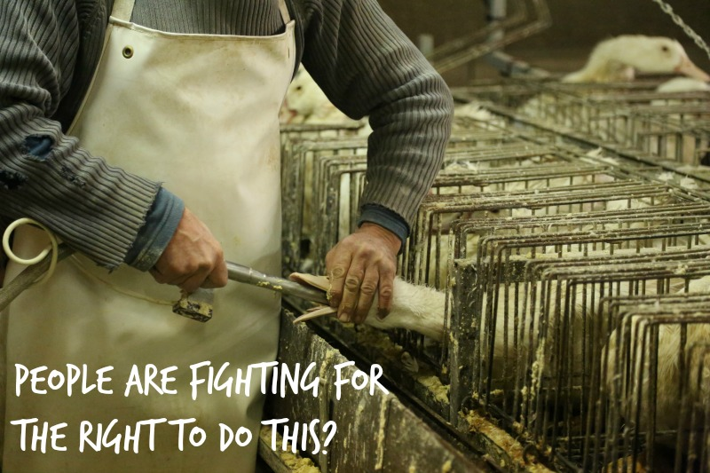 5 Reasons Why Foie Gras is a Completely Jerky Food