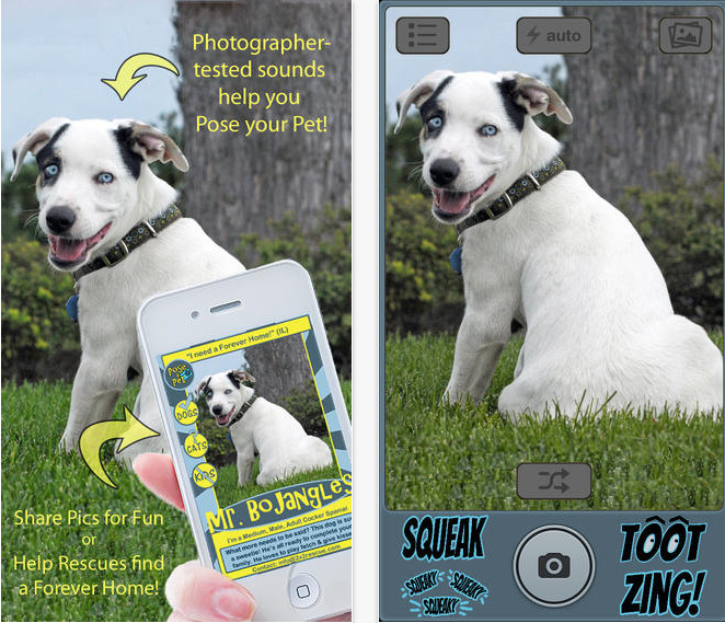 6 Apps That Help Adoptable Animals Find Forever Homes