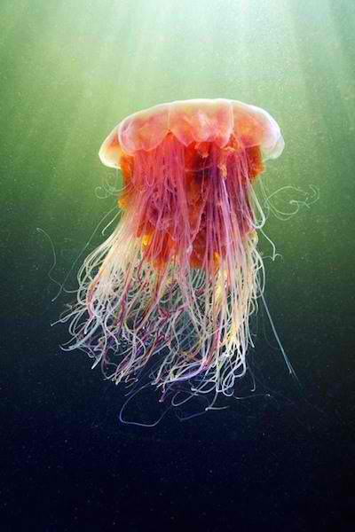 These Beautiful Photos Will Make You Appreciate Jellyfish