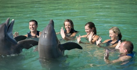 how did we get here? marine mammal captivity in the u.s.